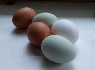 Real eggs blog