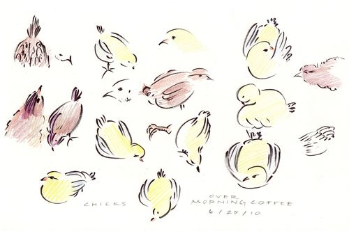Chick sketches