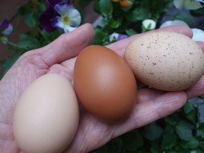 Three eggs