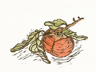 Persimmon color 1 1