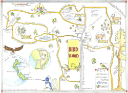 Birdwood Hand Drawn Map 6.19